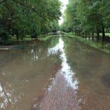 Grön väg efter regn Royaltyfria Bilder