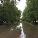 Grön väg efter regn Arkivfoton