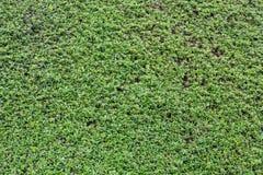 grön vägg Arkivbild