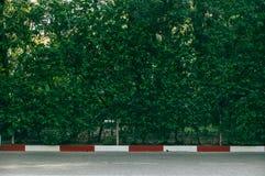 grön vägg Royaltyfria Bilder