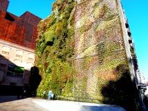 grön vägg Arkivfoto
