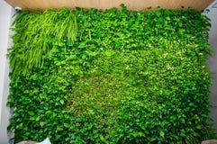 Grön vägg av olika lövfällande växter i inregarneringen Härlig för för bladtapet och miljö för livlig gräsplan plats royaltyfri foto
