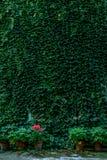 Grön vägg av växter Royaltyfri Fotografi