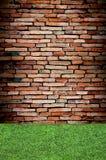 grön vägg för gräs Arkivbild