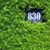 Grön vägg med husnummer Royaltyfri Foto