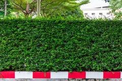 Grön vägggräns Fotografering för Bildbyråer