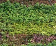 Grön vägglodlinjeträdgård Royaltyfri Bild