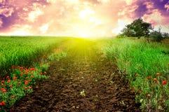 grön vägsolnedgång för fält royaltyfria foton