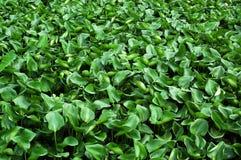 grön värld Royaltyfri Fotografi