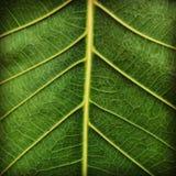 grön värld Royaltyfria Bilder