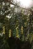 grön växande tree Arkivbilder