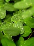 grön växt arkivfoton