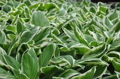 grön växt royaltyfria bilder