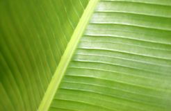 grön växt Royaltyfri Bild
