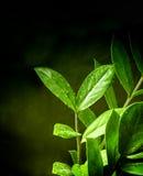 Grön växt Royaltyfri Foto