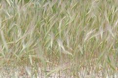 Grön växt- bakgrund Fotografering för Bildbyråer
