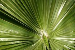 Grön växt i Egypten Royaltyfri Fotografi