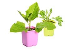 Grön växt i en blomkruka arkivbild