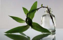 Grön växt i flaskan, en flaska med blomman på vit bakgrund, reflexionen av sidorna Royaltyfri Bild