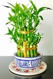Grön växt i huset Arkivfoton