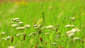 Grön växt i natur lager videofilmer
