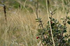 Grön växt i sommar Royaltyfria Foton