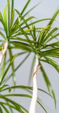 Grön växt i vardagsrummet - isolerat objekt arkivfoto