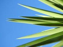 Grön växt med en abstrakt känsla på blå bakgrund royaltyfria foton