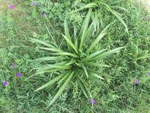 Grön växt med gräs- bakgrund Royaltyfri Bild