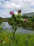 Grön växt med lilablommor och sjö och bi arkivbilder