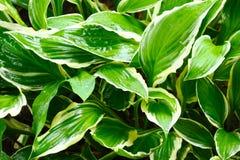 Grön växt med regndroppar Royaltyfri Fotografi