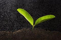 Grön växt med vattendroppe Fotografering för Bildbyråer