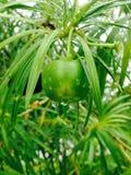 Grön växt och regndroppe Royaltyfria Bilder