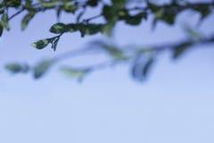 Grön växt på blå bakgrund Arkivbilder