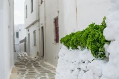 Grön växt på den vita gatan Royaltyfria Bilder