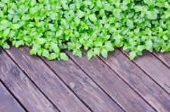 Grön växt på det wood golvet Royaltyfria Bilder