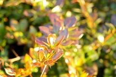 Grön växt på en solig dag Royaltyfri Fotografi