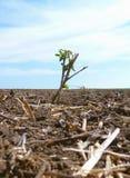 Grön växt på ett plogat fält Arkivbild