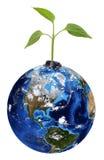 Grön växt på jord Royaltyfri Bild
