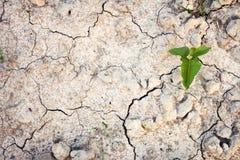 Grön växt på sprucken jord Royaltyfria Foton