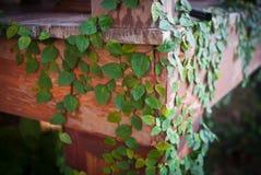 Grön växt på trä Arkivbild