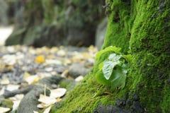Grön växt på trädet Fotografering för Bildbyråer