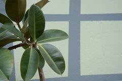 Grön växt på väggen arkivbild
