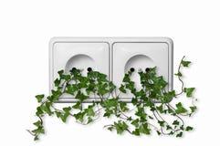 Grön växt som växer från vägguttag Fotografering för Bildbyråer