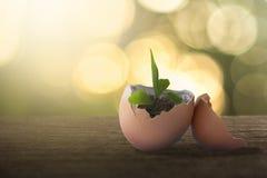 Grön växt som växer i begrepp för äggskal arkivfoto
