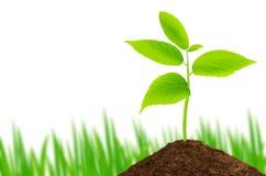 Grön växt som växer på vit bakgrund med gräs royaltyfri fotografi