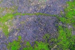 Grön växt som växer ut ur golvbetong med sprucket abstrakt begrepp Arkivbilder