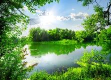 Grön vår på floden Royaltyfria Bilder