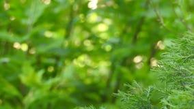 Grön vård- bakgrund för Eco naturväxter lager videofilmer