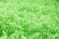 Grön vårmedow fotografering för bildbyråer